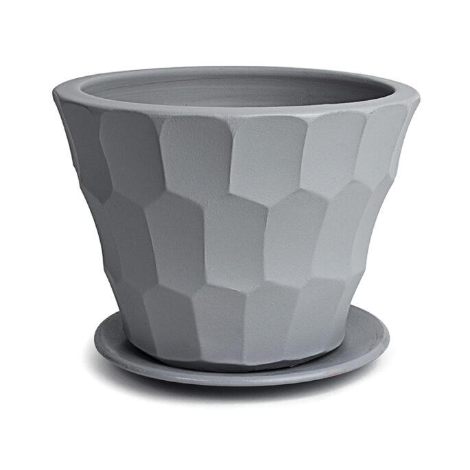 Le cône écaillé gris